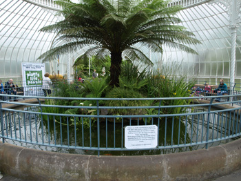 Photo Album of Glasgow Botanic Gardens